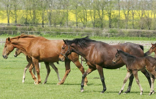 Artificial insemination: 6 things to consider (horseandhound.co.uk)